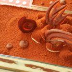 手作りバレンタイン ケーキ ティラミス レシピ 簡単