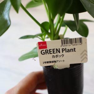 ダイソー 植物